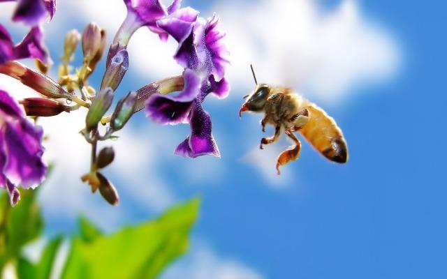 bee-arthro